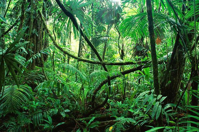 Svårigheterna med att reda ut saker och ting i Smarta Hem-djungeln
